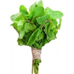 Fresh Mint Leaves - Sold by Bunch