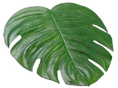 "17"" x 18"" Green Monstera Leaf Placemat"