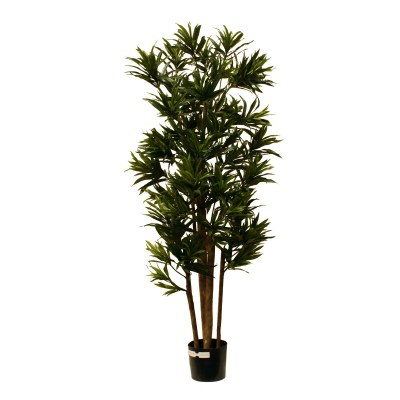 "60"" Green Artificial Dracaena Reflexa Tree in Black Pot"