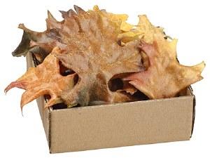 Box of 24 Brown and Rust Oak Leaves