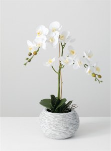 """25"""" White Orchid With Round Gray Pot"""