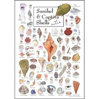 "7"" x 5"" Multicolor Sanibel Shells and Sea Life Greeting Card"