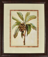 "23"" x 21""  Banana Palm Study 1 Matted Print Under Glass"