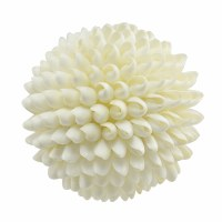 "6"" White Natural Bulla Shell Orb"