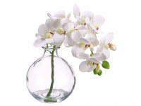 "10"" Cream Artificial Phalaenopsis in Glass Vase"