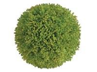 "4"" Green Sedum Orb"