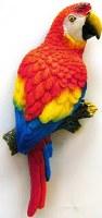 "5"" Scarlett Macaw Parrot Magnet"