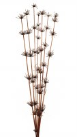 """36"""" Brown Dried Star Bamboo Stalks"""