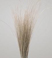"35"" - 40"" Dried Bright Grass"