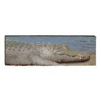 """10"""" x 30"""" Alligator Sunning Plaque"""
