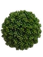 "6"" Green Succulent Orb"