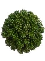 "5"" Green Succulent Orb"