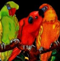 """8"""" Square Multicolor 3 Parrots Tile"""