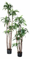 """60"""" Small Potted Green Artificial Fragrams Dracaena"""