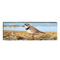 """10"""" x 30"""" Pipping Plover Plaque"""