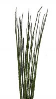 """40"""" Dried Basil Caba Spines 8 oz. Bunch"""