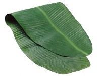 """18"""" x 48"""" Green Banana Leaf Table Runner"""