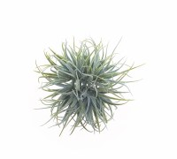 "5"" Green Faux Tillandsia Orb"
