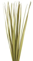 "72"" Dried Natural Sabal Grass"
