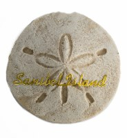 "3"" Sanibel Island Sand Dollar Magnet"