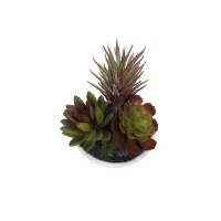 """4"""" Green and Burgundy Faux Succulents in Low White Pot"""