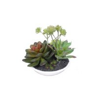 """4"""" Mixed Faux Succulents in Low White Pot"""