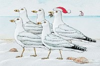 """5"""" x 8"""" Box of 16 Marching Gulls Christmas Cards"""