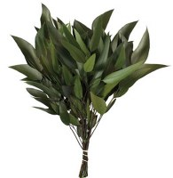 """18"""" - 20"""" Dried Bunch of Green Weeping Willow"""