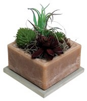 "4"" Square Mojave Scented Wax Box With Succulents"