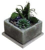"4"" Square Sage Brush Scented Wax Box With Succulents"