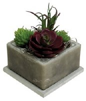 "4"" Square Sand Storm Scented Wax Box With Succulents"