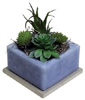 "4"" Square Cactus Water Scented Wax Box With Succulents"