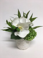 """10""""  Faux White Orchids and Green Brunia in White Pot"""