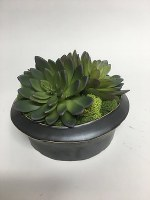 "6"" Black Potted Faux Succulents"