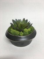 "5"" Black Potted Faux Echeveria Succulent"