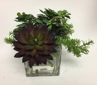 "11"" Faux Green and Burgundy Succulents in Square Glass Vase"