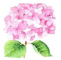 "5"" Square Hydrangea Rose Paper Beverage Napkins"
