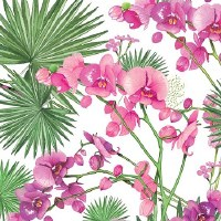 "5"" Square Pink Orchids and Palms Paper Beverage Napkins"