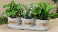 "Set of Three 13"" Gray Cement Herb Pots With Tray"