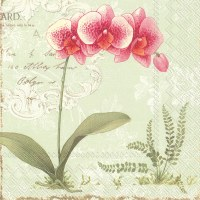 """5"""" Square Pink Orchid on Green Beverage Napkins"""