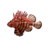 """24"""" x 19"""" Lionfish Metal Plaque MM172"""