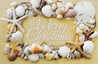 Box of 16 Seashell Christmas Cards