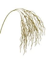 """31"""" Gold Glitter Hanging Grass"""