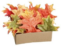 Box of 24 Orange and Red Oak Leaves