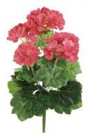 """16"""" Coral Geranium Bush"""