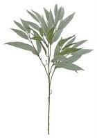 "31"" Gray Needle Leaf Eucalyptus"