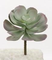 "6"" Sage and Purple Echeveria Succulent"