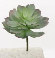 "8"" Sage and Purple Echeveria Succulent"