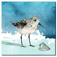 "16"" Square Short Bill Shorebird Canvas"