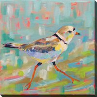 "24"" Square Coastal Plover 1 Canvas"